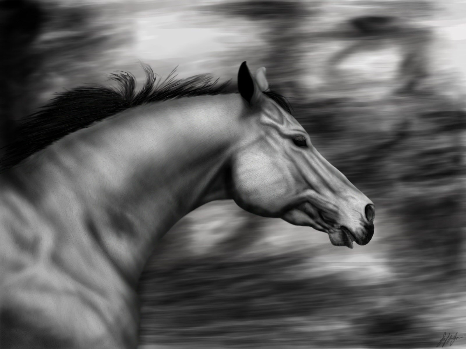 wallpapers-room_com___bw_horse_by_kyliegirl_1600x1200