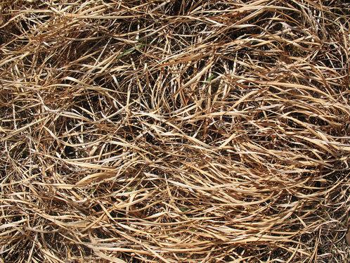 grass-texture-2