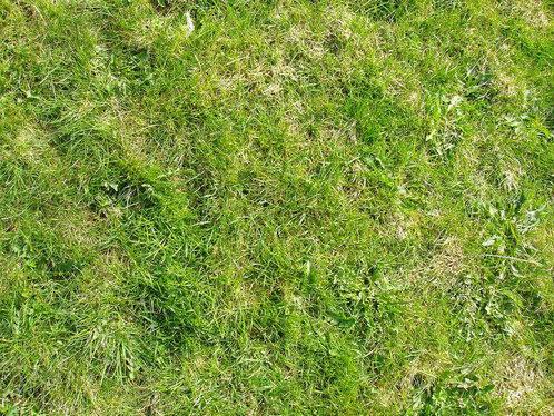 grass-texture-3