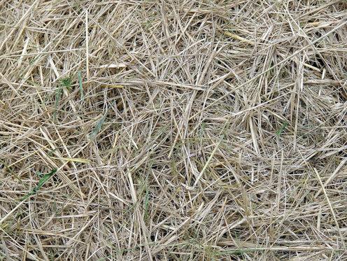 grass-texture-4