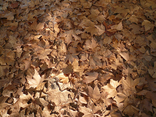 dead-leaves-texture-2