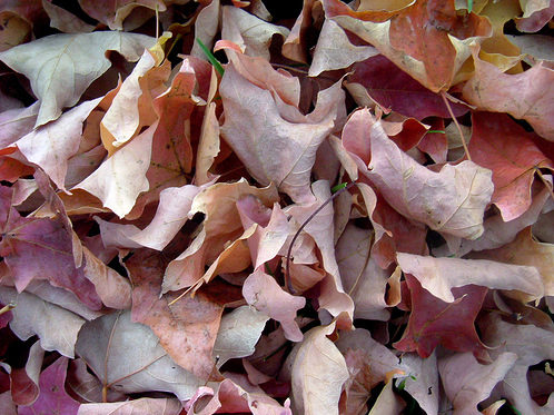 dead-leaves-texture-3