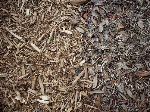 dead-leaves-texture-4