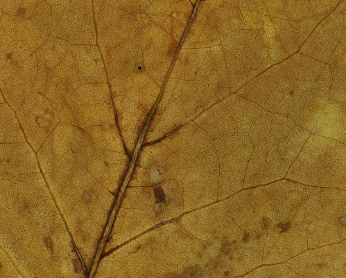 dead-leaves-texture-5